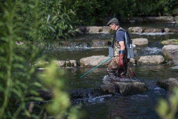 Karl Schwebel vom Hessischen Verband der Fischer ist mit dem Elektrokescher in die Modau gestiegen.