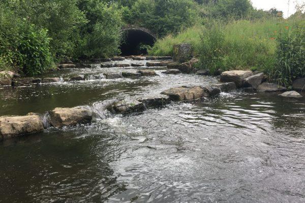 Die Fischtreppe ist ein Kleinod im Ort, ein Platz für Picknick und Fußbäder. Und ein Refugium für Bachforellen.