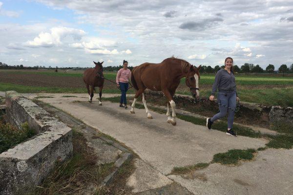 Auf Stockstadt zu tauchen immer mehr Pferdehöfe und Reiter auf.