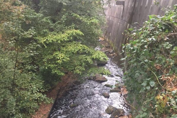 Das ist die steilste Uferwand an der Modau. An solchen Steilhängen brütet eigentlich der Eisvogel.