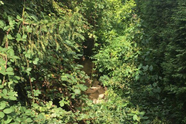 Die Modau erscheint in Pfungstadt manchmal wie ein Dschungel, oft überwachsen, sodass man kaum hindurchsehen kann.