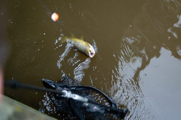 Der Fisch ist im Netz, doch nur, weil Schäfer den Kescher im Liegen gerade so ins Wasser schieben kann.