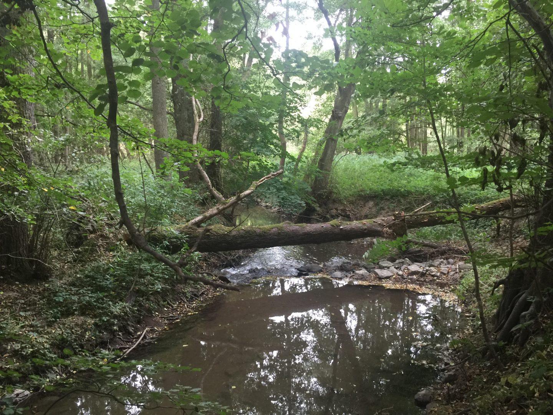 Nach Nieder-Modau zeigt der Fluss ein wilderes Gesicht, schlägt Kurven und rauscht unter umgefallenen Bäumen hindurch.