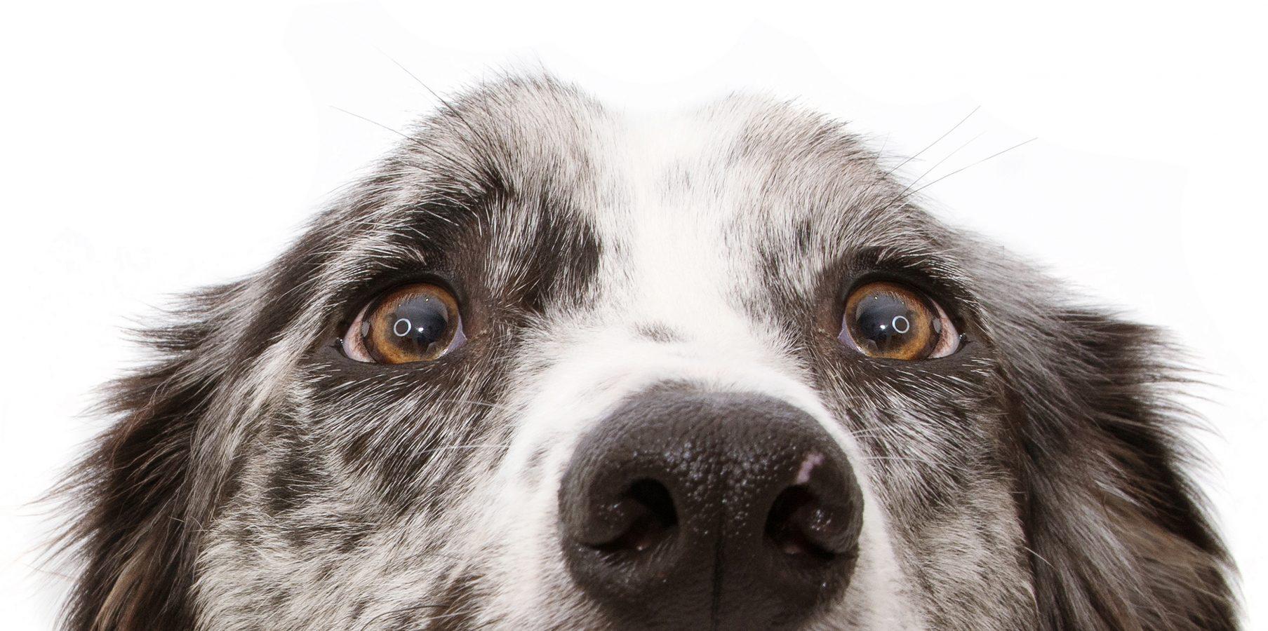 Dogsitting – das Geschäft mit dem Gassigehen