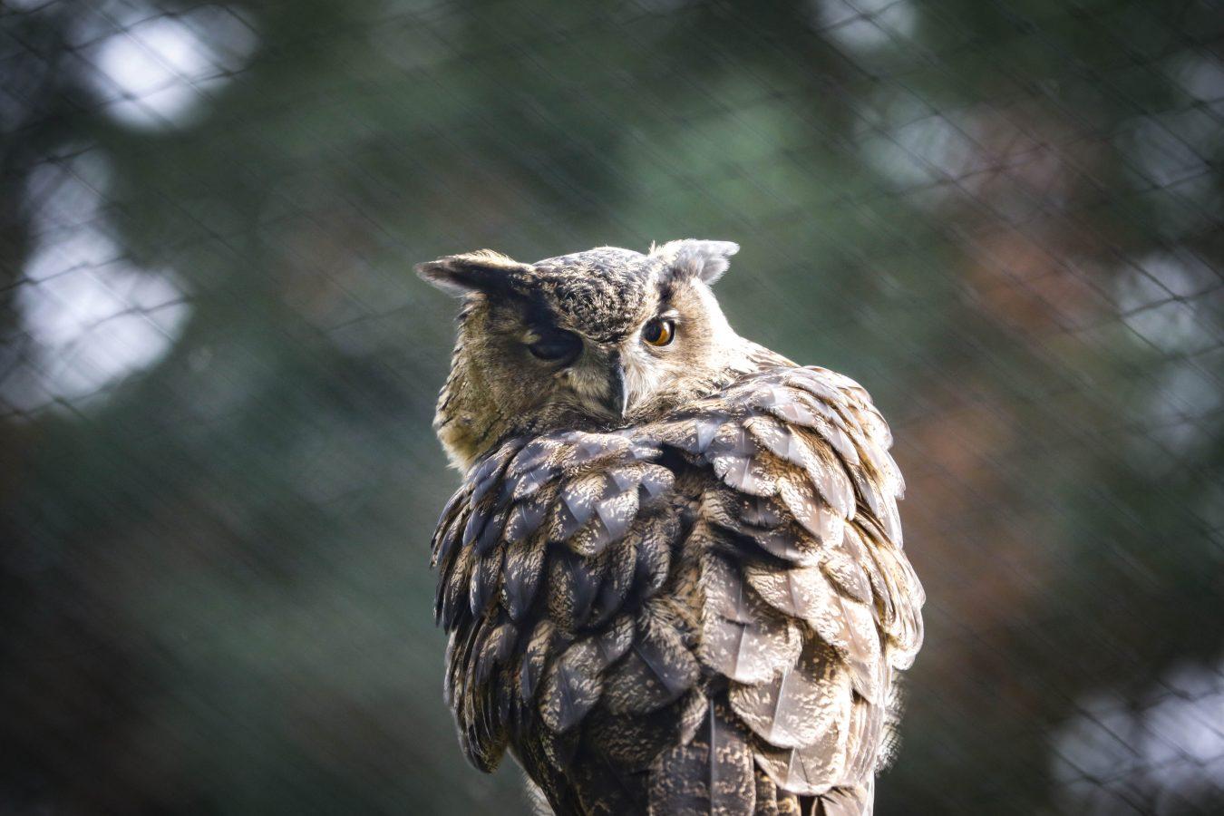 Greifbar nah: Neue Greifvogelanlage in der Fasanerie Wiesbaden