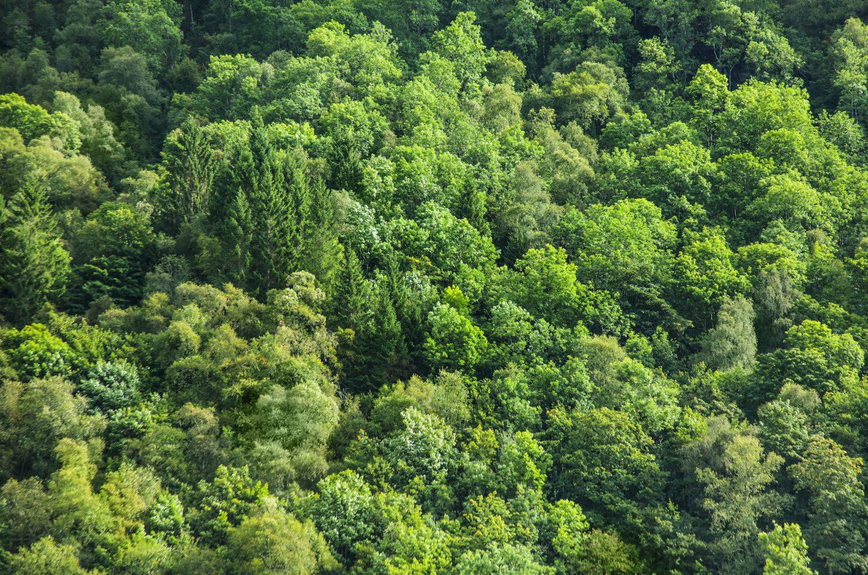 Waldbaden – wie geht das eigentlich?