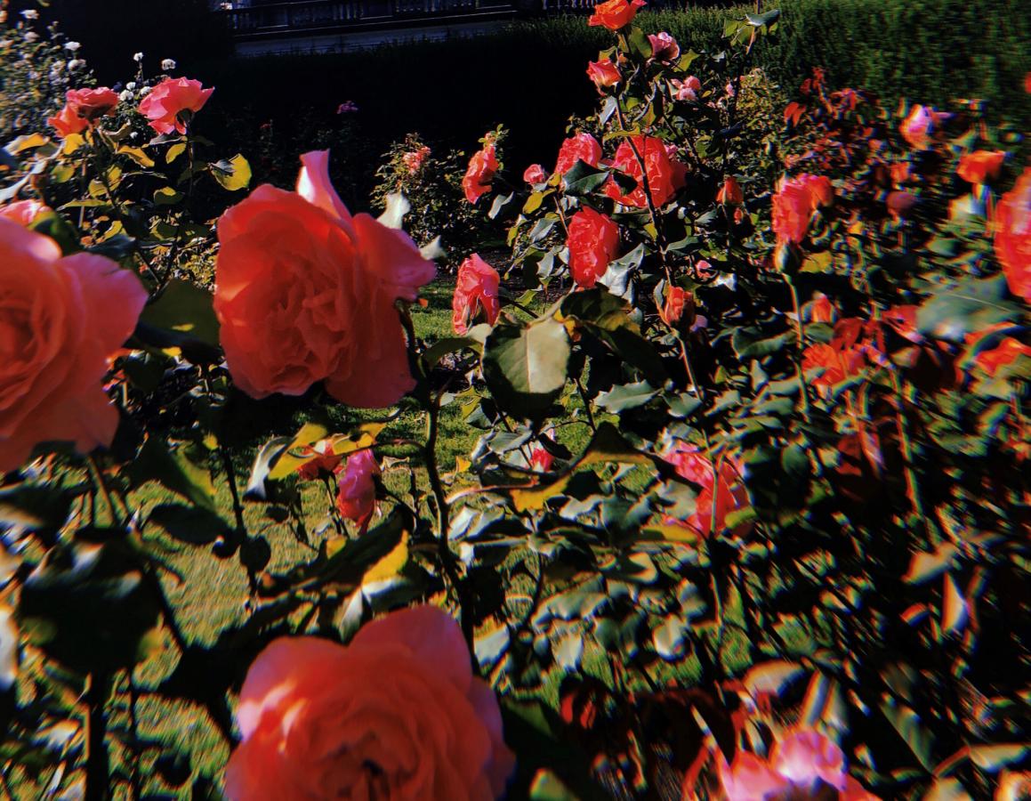 Valentinstag – Keine Rose für die Mainzer?