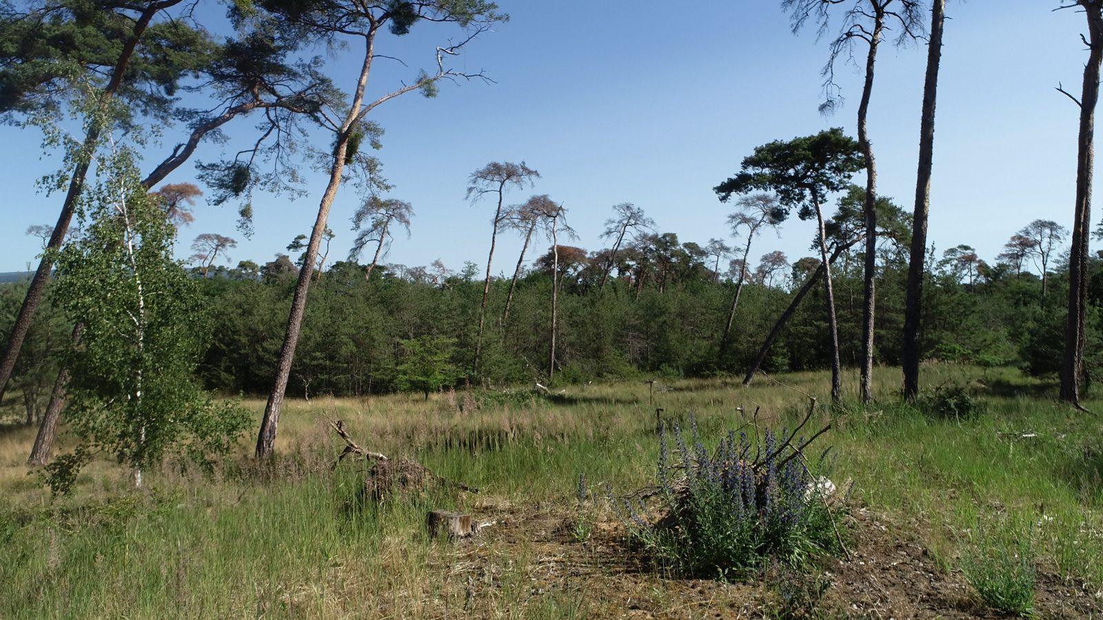 Der Wald in der Klimakrise: So könnte er gerettet werden